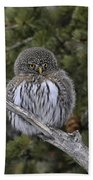 Little One - Northern Pygmy Owl Beach Towel