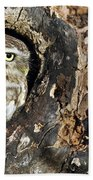 Little Owl 4 Beach Towel