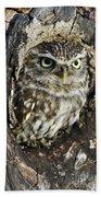 Little Owl 6 Beach Towel