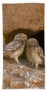 Little Owl Athene Noctua  Beach Towel
