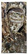 Little Owl In Hollow Tree Beach Towel
