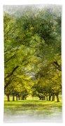 Live Oak Journey Paint Beach Towel