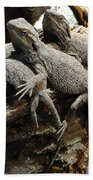 Lizards Beach Towel by Les Cunliffe