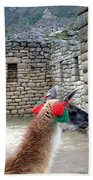 Llama Touring Machu Picchu Beach Towel