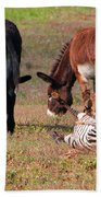 Lmao  Mules And Zebra - Featured In Wildlife Group Beach Towel