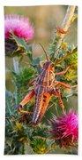 Locust And Thistle 2am-110423 Beach Towel