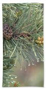 Lodge Pole Pine In The Fog Beach Sheet