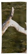 Log Climbing Turtle Beach Towel