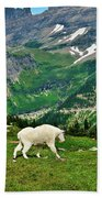 Logan Pass Mountain Goat Beach Towel