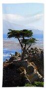 Lone Cypress Tree In Monterey In California Beach Towel