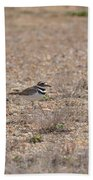 Lone Killdeer Beach Towel