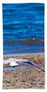Lone Seagull Beach Towel