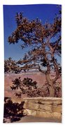 Lone Tree Along The South Rim Beach Towel