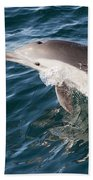 Long-beaked Common Dolphin Porpoising Beach Towel