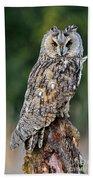 Long-eared Owl 4 Beach Towel