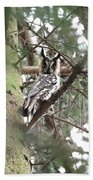 Long Eared Owl At Attention Beach Towel