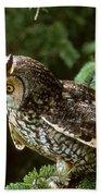 Long-eared Owl Beach Towel