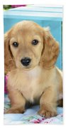 Long Eared Puppy In Front Of Blue Box Beach Towel