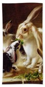 Long-eared Rabbits In A Cage Watched By A Cat Beach Towel by Horatio Henry Couldery