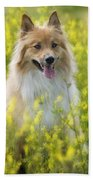 Long Haired Mixed Breed Beach Towel