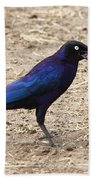 Long Tailed Glossy Starling  Beach Towel