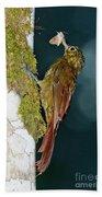 Long-tailed Woodcreeper Beach Towel
