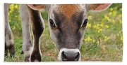 Look Into My Eyes - Jersey Cow - Square Beach Towel