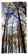 Looking Skyward Into Autumn Trees Beach Towel