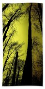 Looking Through The Naked Trees  Beach Towel