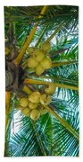 Looking Up A Coconut Tree Beach Towel