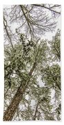 Looking Up At Snow Covered Tree Tops Beach Towel