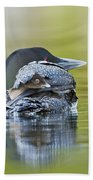 Loon Chick- Feather Hat Beach Towel