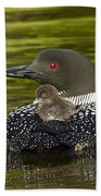 Loon Chick Rides On A Parents Back Beach Towel