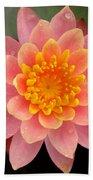 Lotus Bloom Beach Towel