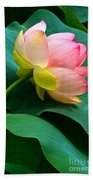 Lotus Blossom And Leaves Beach Towel by Byron Varvarigos