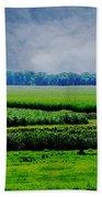 Louisiana Greenway Beach Towel