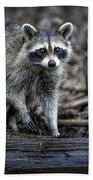 Louisiana Raccoon II Beach Towel
