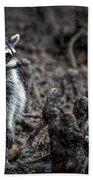 Louisiana Raccoon Beach Towel