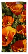 Lovely Burnt Orange Tulips Beach Towel