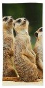 Lovely Group Of Meerkats Beach Towel