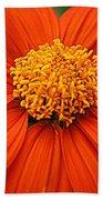 Lovely In Orange - Mexican Daisy Beach Towel