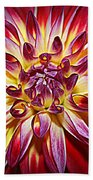 Lovely In Purple And Red - Dahlia Beach Towel