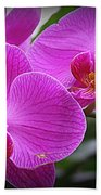 Lovely In Purple - Orchids Beach Towel