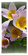 Lovely In White And Yellow - Tulips Beach Towel