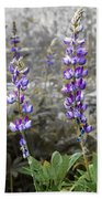 Lovely Lupines Beach Towel