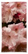 Lovely Pink Rhododendrons With Border Beach Towel