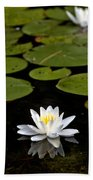 Lovely Pond Lily Beach Towel
