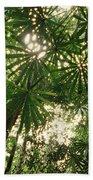 Lowland Tropical Rainforest Fan Palms Beach Towel