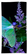 Luna Moth Astilby Flower Black Beach Towel