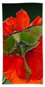 Luna Moth Orange Poppy Green Bg Beach Towel